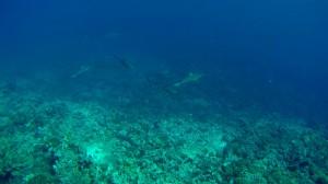 Requins-Mur5