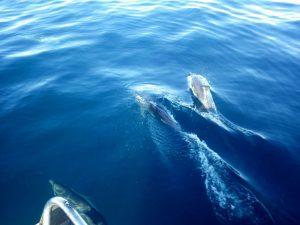 dauphins1